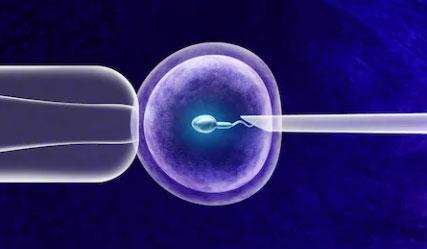 试管婴儿移植前子宫内膜的调理能有效提高试管成功率