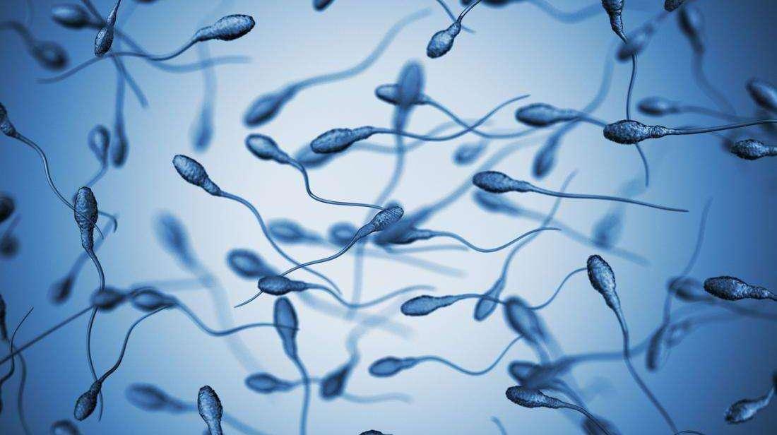 精子成活率低是什么原因导致起的